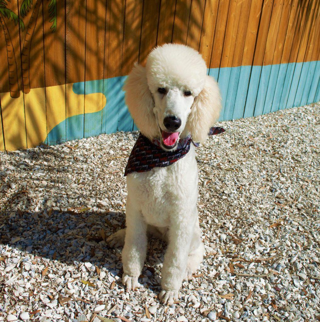 Pasadena pet motel training solutioingenieria Image collections